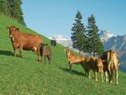 Auch Urner Landwirtschaftsbetriebe eignen sich gut für Bio. (Bild: PD)