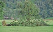 Ein umgestürzter Baum nach einem Gewitter. (Bild: Oliver Mattmann (6. August 2013))
