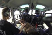 Schäferhündin Aika fliegt im Polizeihelikopter mit. (Bild: Franz Heinzer)