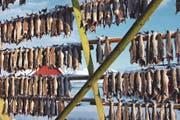 Der Skrei hängt zum Trocknen an der Stange. Wegen ihres immensen Kabeljau-Reichtums hiessen die Lofoten früher Stockfischarchipel. (Bild: Ingrid Schindler)
