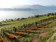 So schön wie hier auf dem Weinberg in Meggen, wird es am Wochenende in der gesamten Schweiz. Es gilt: Raus in die Natur und das schöne Wetter geniessen. (Bild: Leserbild Margrith Imhof-Röthlin)