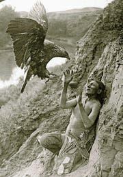 Ein Native American im Clinch mit einem Adler (Foto um 1900). Weit mehr als durch Raubvögel kamen Indianer aber durch Weisse in Bedrängnis. (Bild: Getty)