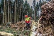 Ein Wald-Arbeiter misst einen Baum aus. (Bild: Nadia Schärli (Geiss, 3. Februar 2018))