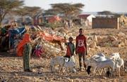 Es ist ein steiniger Weg Afrikas zu mehr Wohlstand: Vertriebene in einem Camp in Somalia. (Bild: Ben Curtis/AP (Qardho, 9. März 2017))