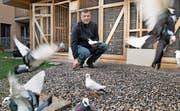 Hobbyzüchter Franco Visonà mit einigen seiner rund 150 Flugtauben bei sich zu Hause. (Bild: Corinne Glanzmann (Ennetbürgen, 4. April 2017))