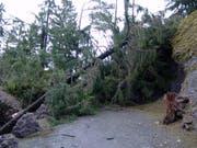 Einige der Bäume stürzten auf die Gehwege im Park stürzten und blockierten diese. Darum ist am Tag nach dem Sturm ein Teil des Parks geschlossen. (Bild: Natur- und Tierpark Goldau)