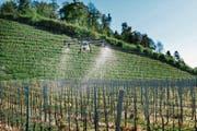 Ein Winzer in Rapperswil lässt seine Reben von einer Drohne besprühen. (Bild: Christian Beutler/Keystone (2. Mai 2018))