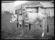 Bauer Stickiger steht dem Fotografen um 1900 Porträt mit der schönsten Kuh im Stall. (Bild: Michael Aschwanden/Staatsarchiv Uri (um 1900))