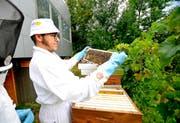 Hampi Krähenbühl kontrolliert seine Bienenstöcke in Fürigen. (Bild: Corinne Glanzmann)