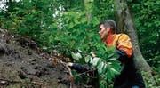 Martin Ziegler koordiniert beim Amt für Wald und Wild die Bekämpfung invasiver Neophyten im Kanton Zug. (Bild: Stefan Kaiser (24. Juli 2017))
