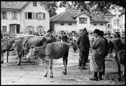 Die kantonale Viehschau fand bis in die 1960er-Jahre auf dem Oberlehn statt. Zugegen waren auch die Viehhändler. (Bild: Foto Aschwanden/Staatsarchiv Uri (Altdorf, um 1950))