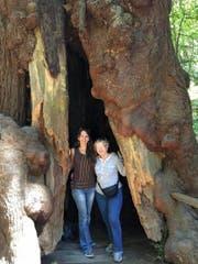 Die Melchtalerin Irma Mesterhazy-von Rotz (rechts) mit ihrer Tochter in Muir Woods (Kalifornien). (Bild: PD)