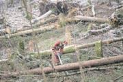 Ein Baum wird am Dienstag 20. Februar 2018 aus Sicherheitsgruenden gefaellt, anlaesslich eines Sicherheits-Holzschlags und der Beseitigung der Sturmschaeden der Januar Stuerme 2018 im Gebiet der Emmettenstrasse der Gemeinden Emmetten und Beckenried im Kanton Nidwalden. In den zwei Gemeinden Beckenried und Emmetten werden von der Forstlichen Arbeitsgemeinschaft Emmetten und Beckenried rund 2000m2 (Kubikmeter) Holz geerntet. (KEYSTONE/Urs Flueeler) (Bild: Urs Flüeler/Keystone (Beckenried, 20. Februar 2018))