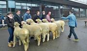 Oben: Fabiana zeigt den Schafen die Ergebnisse des Fotoshootings. Unten: Die Misterwahl wurde unter den erstrangierten Widdern getroffen. (Bild: Paul Küchler (Sachseln, 17. März 2018))