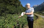 Alexander Imhof, Leiter des Amts für Umwelt, zeigt, wie man die fremden Pflanzen erkennt. (Bild Urs Hanhart)