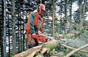 Eine der Hauptaufgaben der kantonalen Forstgruppe ist die Pflege und Nutzung des Kantonswalds. (Bild: Urs Hanhart (Schattdorf, 29. Dezember 2014))