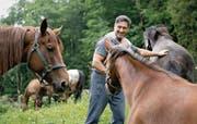 Schauspieler Tom Volkers (Winnetou) freundet sich mit den Pferden an, die im Freilichtspiel zum Einsatz kommen werden. (Bild: Corinne Glanzmann (Engelberg, 16. Juni 2017))
