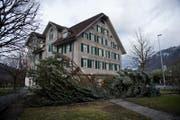 Beim Wohnhaus Mettenweg hat der Sturm Burglind den Weihnachtsbaum geköpft. (Bild: Corinne Glanzmann (Stans, 3. Januar 2018))