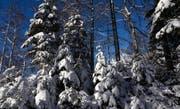 Zurzeit präsentiert sich in höheren Lagen ein richtiges Winter-Märchenland. (Bild: Ernst Immoos)