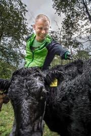Vertrauen ist alles, gerade bei Zuchttieren. Wisi Zgraggen kennt und schätzt seine Dexter-Rinder – und krault sie. (Bild: Nadia Schärli)