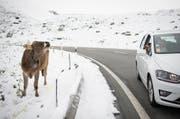 Eine Touristin fotografiert eine Kuh im Schnee auf der Julierpassstrasse bei Bivio. (Bild: Keystone / Gian Ehrenzeller)