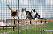 Blicken in eine ungewisse Zukunft: Bewohner des Tierheims Allenwinden. (Bild: Stefan Kaiser (Allenwinden, 3. April 2017))