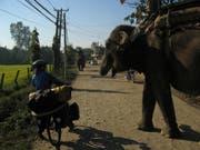 Auf ihrem Abenteuer begegneten sie auch ab und an grossen Tieren wie hier in Nepal. (Bild: PD)