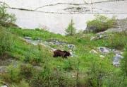Der Bär M13 am Fusse der Albigna-Staumauer im Bergell. (Bild: La Bregaglia / Giorgio Vozza)