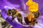 Spitzenreiter ist «More than Honey». (Symbolbild Leser Josef Lustenberger)