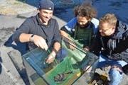 Sie sorgen dafür, dass die exotischen Fische in Uri einen guten Start haben: (von links) David Baumann, Solt Sokoray und Stefan Baumann.Bild: PD (Erstfeld, 12. Oktober 2016)