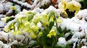 Schnee gab es auch in Wolhusen: mit weissem Hintergrund kommen die andern Farben schön zur Geltung. (Bild: Leserbild Josef Lustenberger)