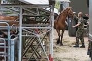 Soldaten sichern die Pferde vom Hof des Thurgauer Bauern Ulrich K. (Bild: Ennio Leanza/Keystone (Hefenhofen, 8. August 2017))