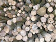 Schläge von Holz sollen wieder hochgefahren werden. (Bild: Oliver Mattmann)