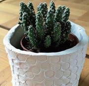 Schönes Zuhause für den Kaktus aus Modelliermasse. (Bild: Jacqueline Schilling)