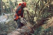 Ein Forstmitarbeiter bei der Arbeit im Wald (Symbolbild). (Bild: Hannes Henz, Zürich/LIGNUM)