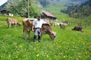 Willi Ambauen mit Kühen auf seiner Weide. Er ist Präsident der Ob- und Nidwaldner Biobauern. (Bild Richard Greuter)