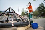 Leander Walker, Badmeister in Hergiswil, bei den Aufräumarbeiten nach einer intensiven Badesaison. (Bild Corinne Glanzmann)