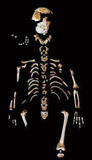 Das Knabenskelett lässt den Erwachsenenkörperbau erahnen. (Bild: Paleoanthropology Group, MNCN-CSIC)