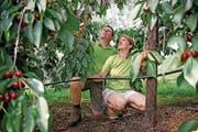 Markus und Manuela Filliger müssen ihre Ennetmooser Kirschen wegen des heissen Wetters besonders häufig bewässern. (Bild: Corinne Glanzmann (Ennetmoos, 21. Juni 2017))