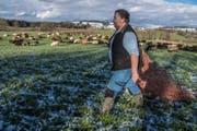 Mit einem Schafnetz pfercht der Hirte die Herde abends ein. (Bild: Nadia Schärli (Buttisholz, 15. Dezember 2017))