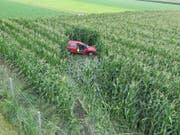 Das Auto landete total beschädigt im Maisfeld. (Bild: KAPO)