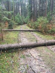 In der Waldregion 1 sind dem Sturm Burglind einige Bäume zum Opfer gefallen. (Bild: PD)