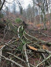 Der Sturm Burglind hat ganze Arbeit geleistet: Der Wanderweg zwischen Oberrindal und Wildberg ist nicht mehr passierbar. (Bild: Bruno Cozzio)