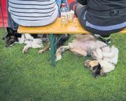 Hundefrisbee Weltmeisterschaft (Bild: Urs Bucher (Urs Bucher))