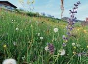 Blumenpracht im aufgewerteten Gebiet Ziel. (Bild: pd)