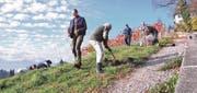 Während die Frauen des Vereins Balger Natur Tulpenzwiebeln setzen, pflanzen die Männer Wildrosen beim neu angelegten Fussweg zum Schloss Grünenstein. (Bild: pd)