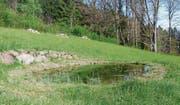 Ein neu angelegter Weiher erweitert die natürliche Vielfalt im Gebiet oberhalb Lüchingens. (Bild: pd)