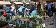 Der Setzlingsmarkt feierte im vergangenen Frühling eine erfolgreiche Premiere. (Bild: Kathrin Meier-Gross)