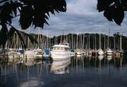 Hafenidylle in Langenargen: Schiffe schaukeln in der Abendsonne.