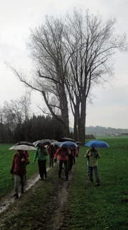 Für den letzten Streckenabschnitt mussten die Toggenburger Seniorenwanderer den Regenschirm auspacken. (Bild: PD)